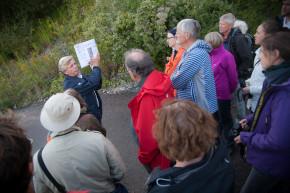 Ola Enquist guidar Naturskyddsföreningen i Limhamns kalkbrott